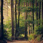 Las 100 mejores frases de naturaleza (y citas célebres)