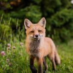 Las 80 mejores frases sobre los animales